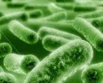 Грибкові інфекції перестають відповідати на ліки